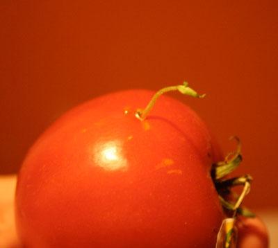 tomatothatwouldnotbestopped