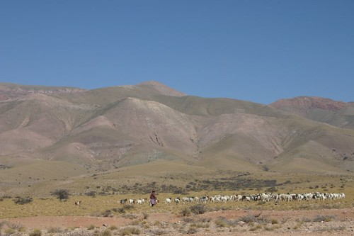 Shepherd in north-west Argentina...