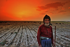 Shepherd (Shapour_3) Tags: sunset iran shepherd filter cokinfilter cokin saveh afghani shapour p133 shapour3