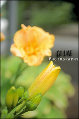 ( Maitha  Bint K) Tags: flowers macro yellow uae g1  gmt