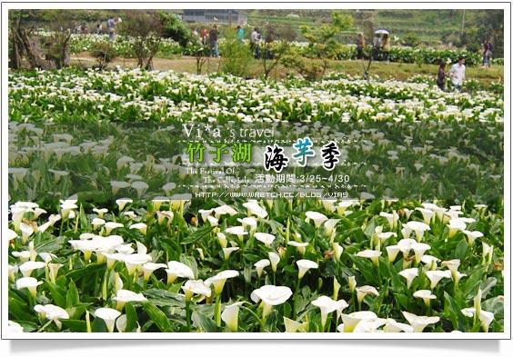 【竹子湖海芋季】竹子湖海芋~陽明山竹子湖海芋季