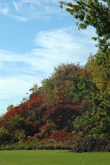 Even if (makeupanid) Tags: thanksgiving autumn sky ontario canada fall grass leaves clouds niagarafalls weekend foliage wispy