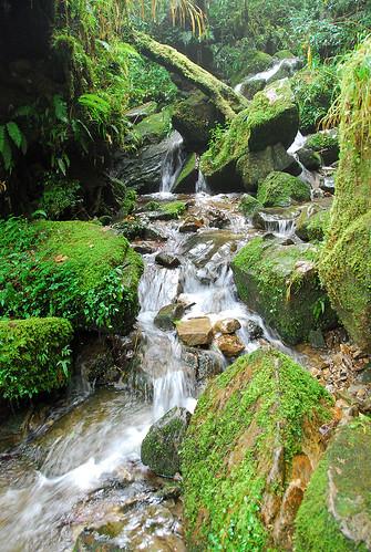 超愛這種綠水
