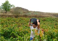 VENDIMIAS 10 (fotomatonazo) Tags: salazar sajazarra vendimias vedimias