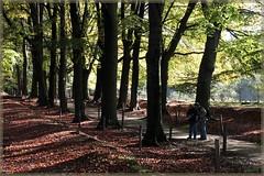 25okt08: een fotogeniek plekje op de Veluwe. (guus timpers) Tags: autumn forest jan herfst bos martijn posbank beuken velp fotografen beukenlaan vluwe