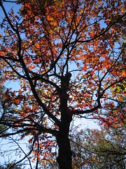 middlesex fells foliage