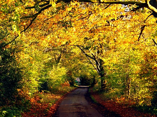Road  into  Autumn
