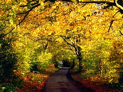 Road  into  Autumn (algo) Tags: road autumn trees england leaves topv2222 photography interestingness topf50 topv333 topv1111 topv999 explore algo topf100 topf200 100f interestingness2 thechilterns chilternhills 200f interestingness5 autumngold 50f explore2 explore5 holidaysvacanzeurlaub 200850plusfaves arrewiglane