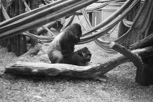 london zoo 023