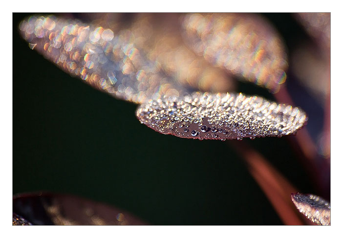http://farm4.static.flickr.com/3046/3023092692_12d9836554_o.jpg