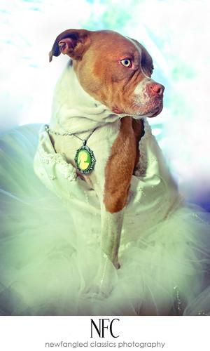 piglet's bridal session