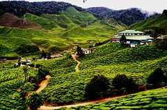 Tea Plantation (emadivine) Tags: road house plant building green landscape factory tea farm hills malaysia plantation pahang cameronhighland potofgold bigmomma blueribbonwinner ysplix thechallengegame challengegamewinner goldstaraward top20greenish natureselegantshots achallengeforyou absolutelystunningscapes thechallengefactory emadivine fotocompetition fotocompetitionbronze fotocompetitionsilver fcsilver trailscenary