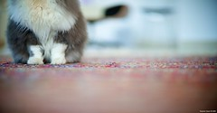 I dont like pet photos (Stephan Geyer) Tags: pet cat canon dof bokeh 85mm 5d canon5d canoneos5d 8512 85l ef85mmf12lusm canon5dclassic