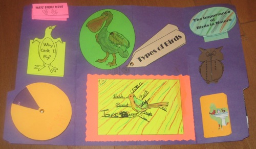 Zippys's Bird Lapbook