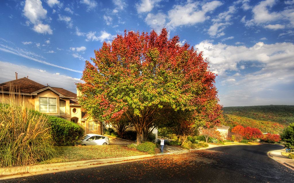 The tree in front of our home as autumn falls to winter (by Stuck in Customs)