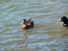 P1000075 (MeRyan) Tags: public birds rivers