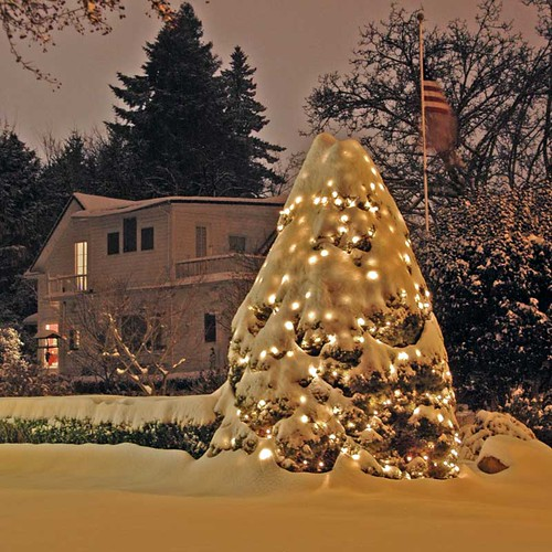 Kris' Outdoor Christmas Tree