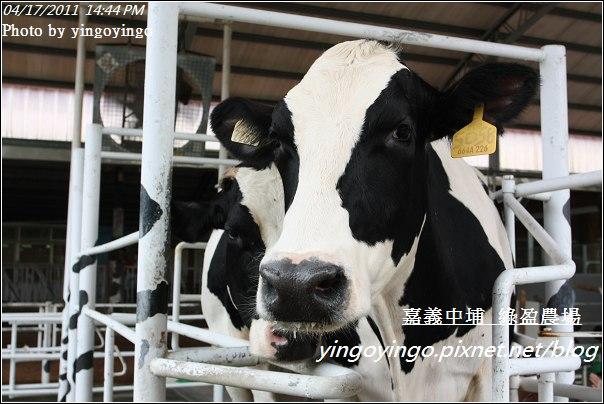 嘉義中埔_綠盈農場20110417_I7010