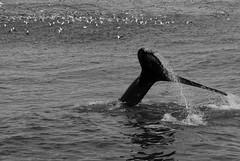 _IGP9141_DxO (DUbisch) Tags: ice fire freedom wasserfall adventure whale eis geysir islandiceland
