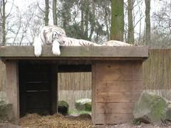 IMG_2033 [1024x768].JPG (yerseypijpelink) Tags: rhenen ouwehands dierentuin yersey