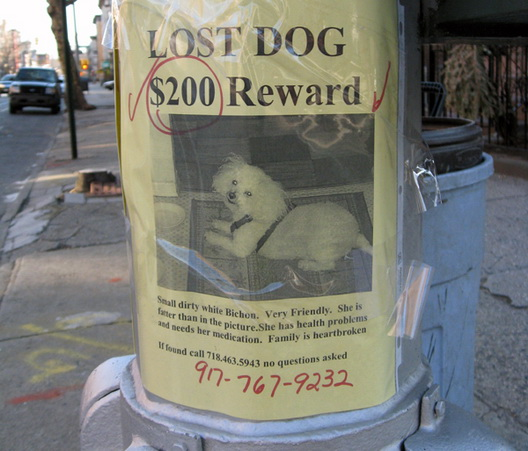 lost dog flier lewis avenue bed stuy crop