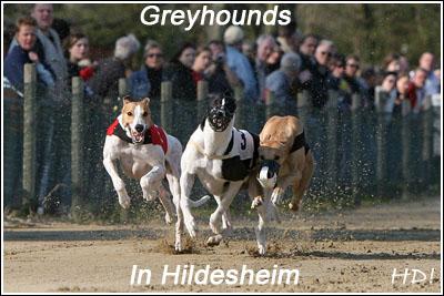 Greys in Hildesheim_400_QL9T1095