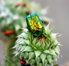 Is this a green diamond or a bug? (Sherwan™) Tags: flower macro nature bug fly spring nikon soe erbil kurdistan seo watcher kurd sherwan naturesfinest goldenglobe irbil d40x کوردستان flowerwatcher