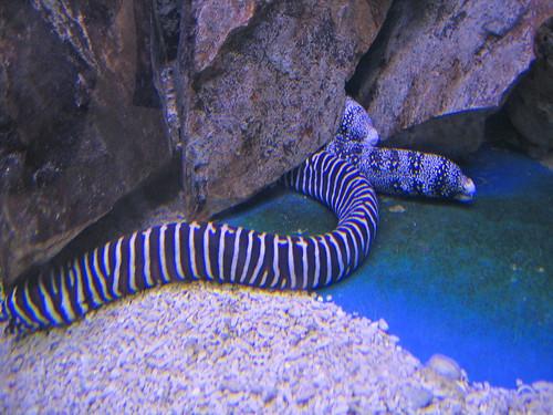 Underwater World Langkawi Travel
