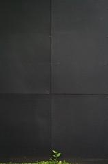 growing against a black wall (orangemania) Tags: black verde green noir negro vert minimalism explored explore376