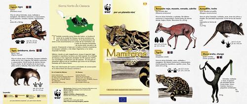 Mamíferos de los Bosques Húmedos de la Sierra Norte de Oaxaca