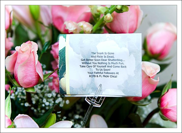 rosa eskimo flower circus