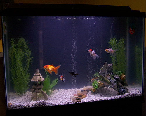 my tank just cleaned