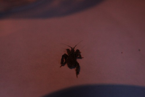 Mysterious Bug: Rear view
