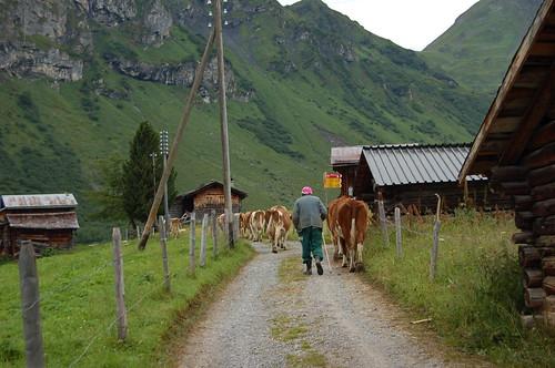 チーズツアーへ行く途中。