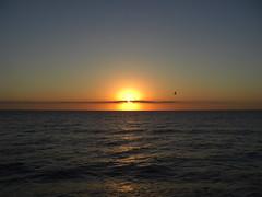 ...la prima alba delle tartarughine caretta caretta (Mi che le) Tags: sunrise mediterraneo mare alba turtle seagull tartaruga calabria gabbiano jonio carettacaretta marejonio