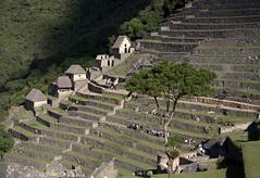Machu Picchu (rollfiction) Tags: machu picchu pichu