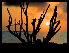 Branches (violinconcertono3) Tags: sunset sea sky orange sun silhouette clouds branches explore 1963 theunforgettablepictures 19sixty3