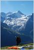 Last checkup (Swisspix) Tags: morning sky sports sport schweiz suisse swiss air sunny wallis parachute valais parapente zinal bleusky zinalrothorn valdanniviers abigfave adoublefave