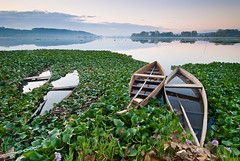Picturesque Beauty (Lus C) Tags: lake sunrise dawn boat bravo time biosphere picturesque janeausten invasivespecies waterhyacinth eichhornia senseandsensibility