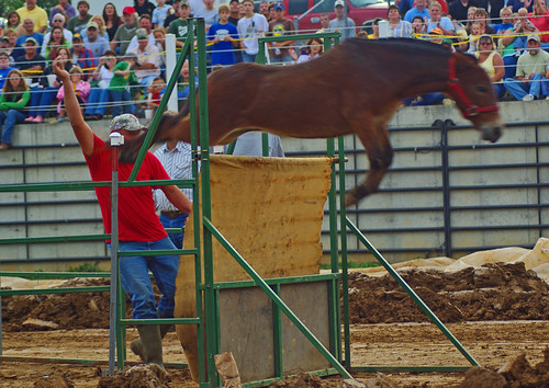 Mule Jump at Altenburg Fair 2008
