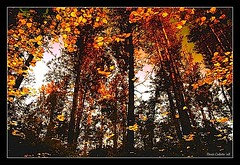 Poussires d'or...!!! (Denis Collette...!!!) Tags: autumn trees wild fab canada reflection tree automne reflections river gold photo quebec photos rivire autumns safari reflet arbres qubec rivers walden dust collette arbre reflets photosafari impressionist denis sauvages thoreau poussires sauvage gbr impressionists rivires portneuf wildrivers firstquality poussire wildriver automnes impressionistes impressionniste dusts deniscollette pontrouge infinestyle riviresauvage world100f obq riviressauvages photossafari