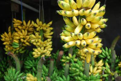 banananona