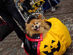 Pumpkin dog Kawasaki Halloween 2008 44 (by HAMACHI!)