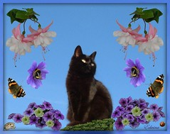 In the Summertime............ (EdwinaFran) Tags: flowers flower cat butterfly fun fuchsia redadmiral bee bumblebee toad ladybug petunia geranium soe digitalcameraclub supershot bej ladbird anawesomeshot pinkmarshmallow goldstaraward 100commentgroup dragondaggerphoto thecelebrationoflife edwinafran