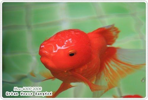 Urban House 魚-1