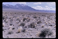 Las Vegas District, Nevada, Landscape (1970)