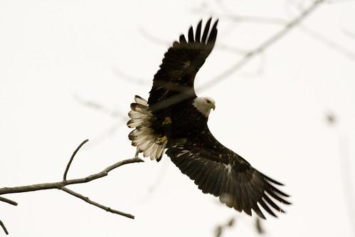 EagleBannerDikeRd11222008JGWardIMG_8222