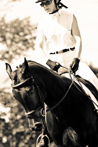 Dinks' Dressage: A dark horse faces the camera, head down and neck arched. The rider has a relaxed, comfortable seat with  hands low on the reins and the horse's ears are flicked back, almost as though listening to the rider