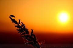 Good Morning December :) (AgniMax) Tags: red orange sun nature yellow sunrise canon bug december waterdrops goodmorning naturephotography dews natureart beautifulnature flickrsbest naturepictures artofnature mistydawn naturewallpaper canoneos400d platinumphoto morningdews mistymeadows mistylyrics