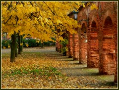 clotre d'automne (platane31) Tags: autumn trees orange france fall leaves yellow automne lumix fz20 arbres frame toulouse arcades cadre feuilles briques jaunes clotre cloyster superaplus aplusphoto leplatane lumixaward